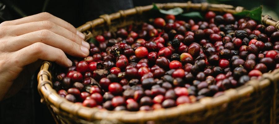 Kaffee gesund nachhaltig und biologisch geniesen - Kaffee gesund, nachhaltig und biologisch genießen